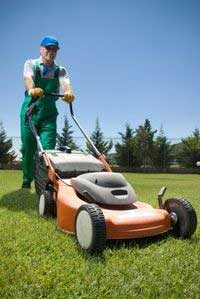 lawn care ideas